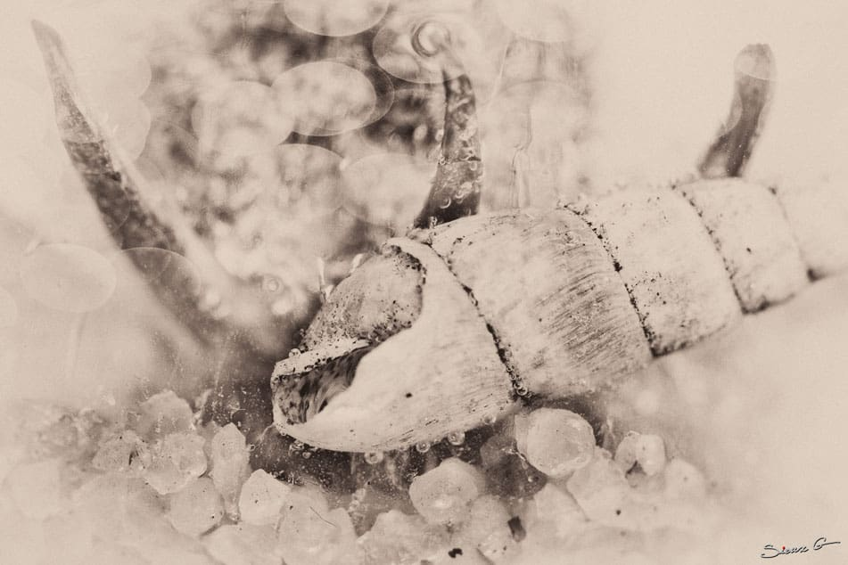IMG_7584-LR-Sepia-(1-of-1)